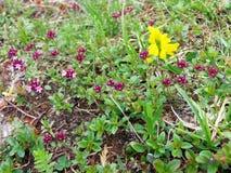Plantas coloridas Foto de Stock Royalty Free