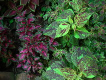 Plantas coloridas Imagem de Stock Royalty Free
