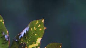 Plantas com cena da chuva do fundo do borrão filme