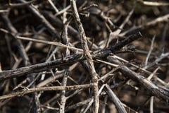 Plantas com espinhos Imagem de Stock Royalty Free