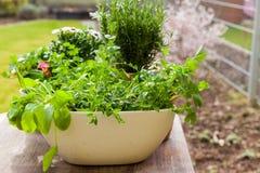 Plantas com flores e ervas no jardim Fotos de Stock Royalty Free