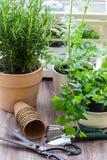 Plantas com flores e ervas no jardim Imagens de Stock