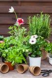 Plantas com flores e ervas no jardim Fotos de Stock