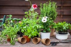 Plantas com flores e ervas no jardim Imagens de Stock Royalty Free