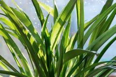 Plantas com gotas da água Fotos de Stock
