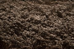 Plantas com uma camada fina de neve e de geada fotografia de stock