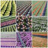 Plantas comerciais que crescem na estufa Fotos de Stock Royalty Free