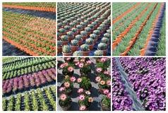 Plantas comerciales que crecen en invernadero Foto de archivo