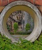 Plantas con el fondo de la piedra caliza Fotografía de archivo libre de regalías
