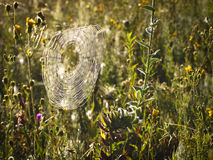 Plantas con el web de araña imagen de archivo