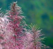 Plantas con la fotografía rojiza del fondo de las ramas Imagenes de archivo