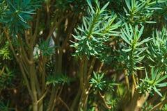 Plantas con las hojas verdes fotos de archivo