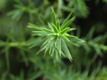 Plantas con los conos Fotografía de archivo libre de regalías