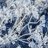 Plantas congeladas Foto de Stock Royalty Free