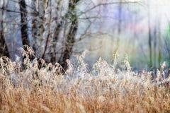 Plantas congeladas Imagen de archivo
