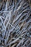 Plantas congeladas Fotos de archivo