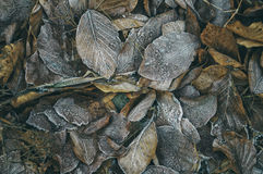 Plantas congeladas Fotografía de archivo
