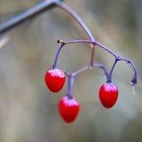 Plantas congeladas durante o inverno Fotos de Stock Royalty Free