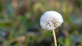Plantas congeladas en oto?o metrajes