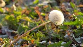 Plantas congeladas en oto?o almacen de metraje de vídeo