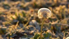 Plantas congeladas en oto?o almacen de video