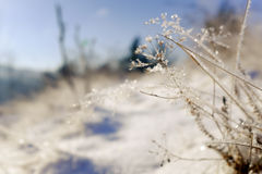Plantas congeladas Naturaleza en invierno Foto de archivo libre de regalías