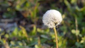 Plantas congeladas no outono video estoque