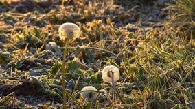 Plantas congeladas no outono filme