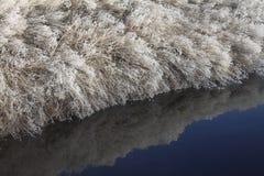 Plantas congeladas que refletem em um córrego fotos de stock royalty free
