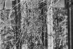 Plantas contra las verjas Fotografía de archivo libre de regalías