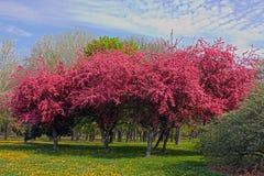 Plantas cor-de-rosa da flor Fotos de Stock Royalty Free