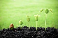 Plantas crecientes Imagen de archivo