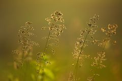 Plantas crecientes en la frescura de la mañana del claro de la naturaleza Fotos de archivo libres de regalías