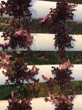 Plantas crecientes vegetales en jardín Foto de archivo libre de regalías