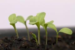 Plantas crescentes fotografia de stock
