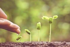 Plantas crescentes fotos de stock royalty free