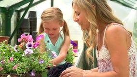 Plantas crescentes da mãe e da filha na estufa video estoque