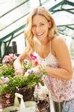 Plantas crescentes da mulher na estufa Imagens de Stock