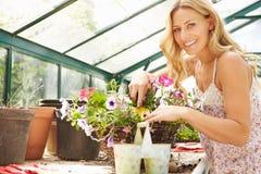 Plantas crescentes da mulher na estufa Imagens de Stock Royalty Free