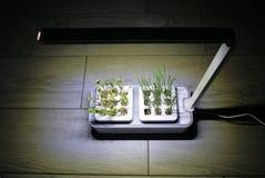 Plantas crescentes em casa Potenciômetros especiais para ervas crescentes, plantas, flores em casa Detalhes, close-up e fotografi fotos de stock