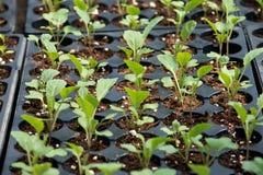 Plantas crescidas recipiente da exploração agrícola de Amish imagens de stock royalty free
