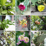 Plantas croatas Imagen de archivo