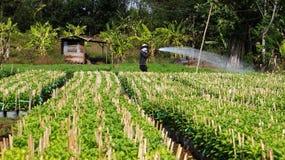 Plantas cultivadas de trabajo del granjero en el pueblo de la granja. LA FUGA HACE Imagen de archivo libre de regalías
