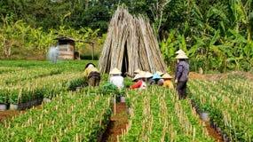 Plantas cultivadas de trabajo del granjero en el pueblo de la granja. LA FUGA HACE Foto de archivo libre de regalías