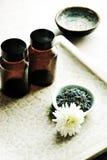Plantas curativas Imagen de archivo libre de regalías
