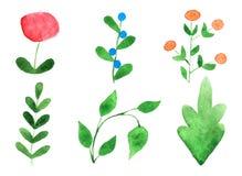 Plantas da aquarela Fotografia de Stock Royalty Free