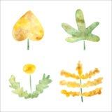 Plantas da aquarela Imagens de Stock