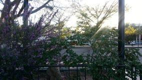 Plantas da calha de Sun Foto de Stock