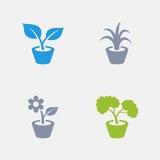 Plantas da casa - ícones do granito ilustração do vetor