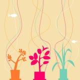 Plantas da casa Imagens de Stock Royalty Free